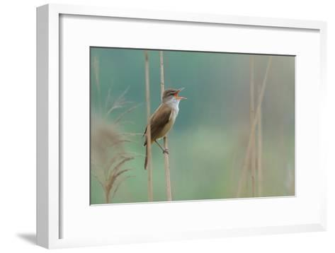 The Singer of the Reed-Valentino Alessandro-Framed Art Print