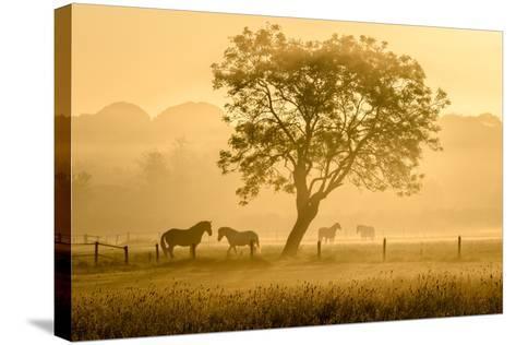 Golden Horses-Richard Guijt-Stretched Canvas Print