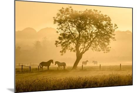 Golden Horses-Richard Guijt-Mounted Photographic Print