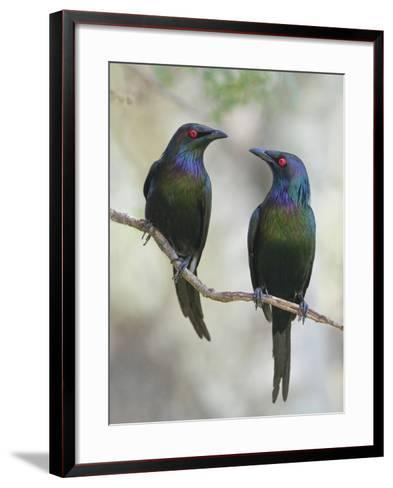 Beautiful Couple-Jacqueline Hammer-Framed Art Print