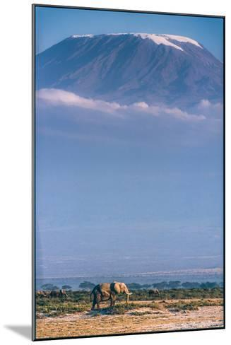 Kilimanjaro and the Quiet Sentinels-Jeffrey C. Sink-Mounted Photographic Print