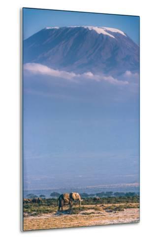 Kilimanjaro and the Quiet Sentinels-Jeffrey C. Sink-Metal Print