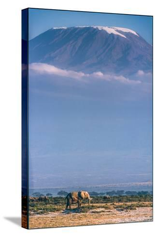 Kilimanjaro and the Quiet Sentinels-Jeffrey C. Sink-Stretched Canvas Print