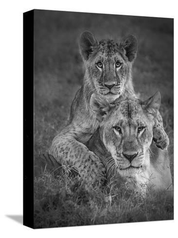 Playtime With Mama!-Ali Khataw-Stretched Canvas Print