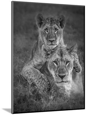 Playtime With Mama!-Ali Khataw-Mounted Photographic Print