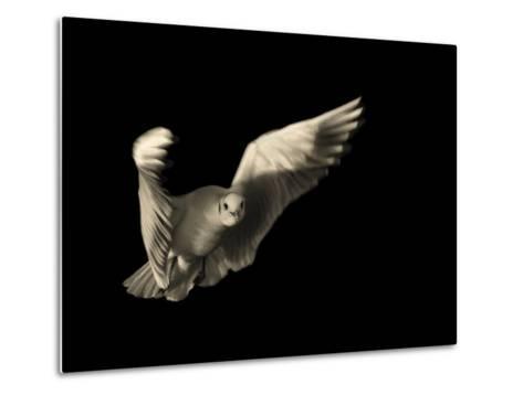 Air Breaking- Anthonyroberts-Metal Print