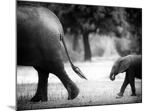 Following in Your Footsteps-Giovanni Casini-Mounted Photographic Print