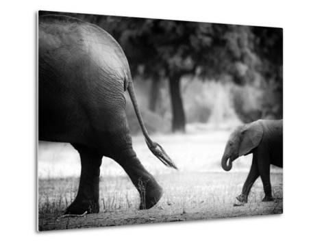 Following in Your Footsteps-Giovanni Casini-Metal Print
