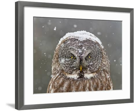 Great Grey Owl Winter Portrait-Mircea Costina-Framed Art Print