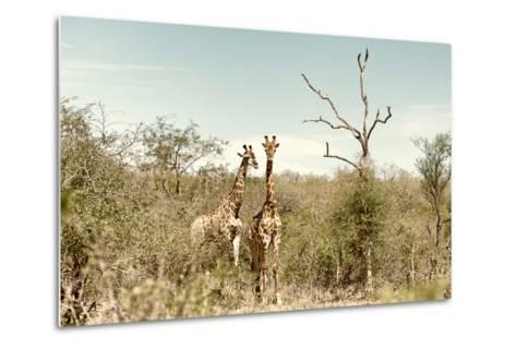 Awesome South Africa Collection - Two Giraffes I-Philippe Hugonnard-Metal Print