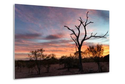 Awesome South Africa Collection - Savanna Trees at Sunrise-Philippe Hugonnard-Metal Print