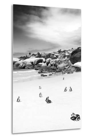 Awesome South Africa Collection B&W - African Penguins at Foxi Beach II-Philippe Hugonnard-Metal Print