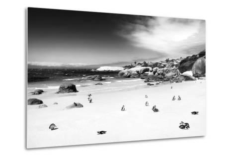 Awesome South Africa Collection B&W - African Penguins at Foxi Beach-Philippe Hugonnard-Metal Print