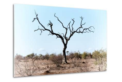 Awesome South Africa Collection - Savanna Tree VIII-Philippe Hugonnard-Metal Print