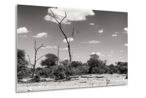 Awesome South Africa Collection B&W - African Savannah Landscape II-Philippe Hugonnard-Metal Print