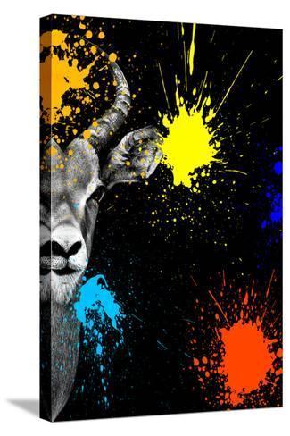 Safari Colors Pop Collection - Antelope Impala Portrait-Philippe Hugonnard-Stretched Canvas Print