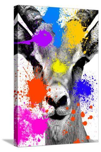 Safari Colors Pop Collection - Antelope Reedbuck-Philippe Hugonnard-Stretched Canvas Print