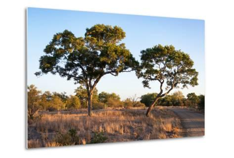 Awesome South Africa Collection - Savanna Trees at Sunset-Philippe Hugonnard-Metal Print