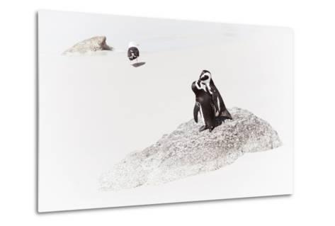 Awesome South Africa Collection - Penguin Lovers II-Philippe Hugonnard-Metal Print