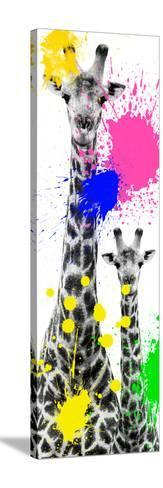 Safari Colors Pop Collection - Giraffes III-Philippe Hugonnard-Stretched Canvas Print