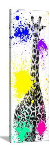 Safari Colors Pop Collection - Giraffe X-Philippe Hugonnard-Stretched Canvas Print