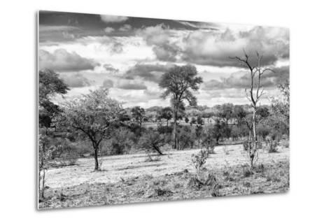 Awesome South Africa Collection B&W - African Landscape VII-Philippe Hugonnard-Metal Print