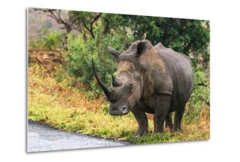 Awesome South Africa Collection - Rhinoceros-Philippe Hugonnard-Metal Print