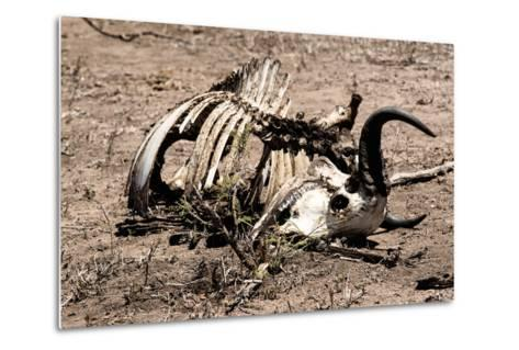 Awesome South Africa Collection - Safari Bone-Philippe Hugonnard-Metal Print