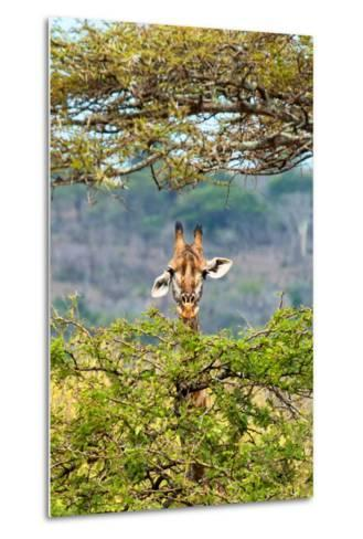 Awesome South Africa Collection - Curious Giraffe-Philippe Hugonnard-Metal Print