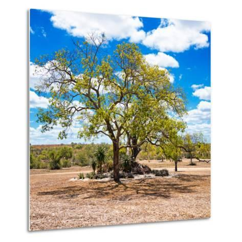 Awesome South Africa Collection Square - African Acacia Tree-Philippe Hugonnard-Metal Print