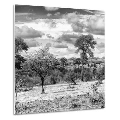 Awesome South Africa Collection Square - Savanna Landscape IV B&W-Philippe Hugonnard-Metal Print
