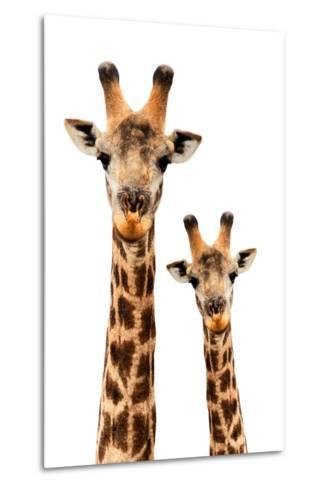 Safari Profile Collection - Portrait of Giraffe and Baby White Edition III-Philippe Hugonnard-Metal Print