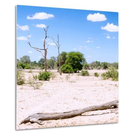 Awesome South Africa Collection Square - Savannah Landscape III-Philippe Hugonnard-Metal Print