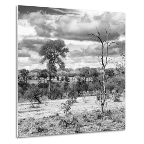 Awesome South Africa Collection Square - Savanna Landscape VI B&W-Philippe Hugonnard-Metal Print
