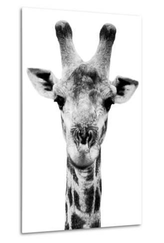Safari Profile Collection - Portrait of Giraffe White Edition V-Philippe Hugonnard-Metal Print
