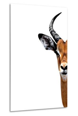 Safari Profile Collection - Antelope Face White Edition II-Philippe Hugonnard-Metal Print