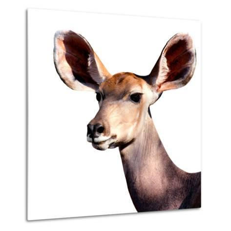 Safari Profile Collection - Antelope Impala Portrait White Edition V-Philippe Hugonnard-Metal Print