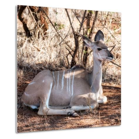 Awesome South Africa Collection Square - Impala Antelope-Philippe Hugonnard-Metal Print