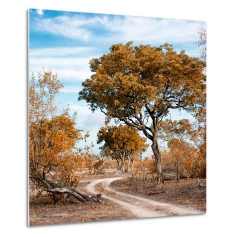 Awesome South Africa Collection Square - African Safari Road with Fall Colors-Philippe Hugonnard-Metal Print