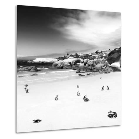 Awesome South Africa Collection Square - Colony of Penguins B&W-Philippe Hugonnard-Metal Print
