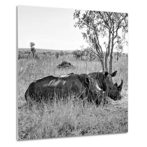 Awesome South Africa Collection Square - Two Rhinoceros sleeping B&W-Philippe Hugonnard-Metal Print