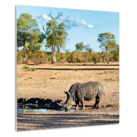 Awesome South Africa Collection Square - Rhinoceros in Savanna Landscape at Sunset-Philippe Hugonnard-Metal Print