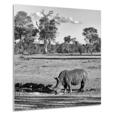 Awesome South Africa Collection Square - Rhinoceros in Savanna Landscape-Philippe Hugonnard-Metal Print