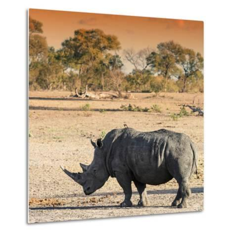 Awesome South Africa Collection Square - Rhinoceros in Savanna at Sunset-Philippe Hugonnard-Metal Print