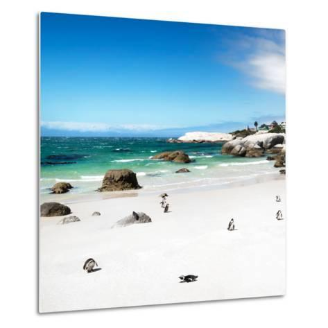 Awesome South Africa Collection Square - Colony of Penguins II-Philippe Hugonnard-Metal Print