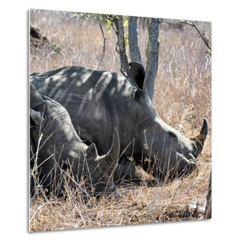 Awesome South Africa Collection Square - Two White Rhinos-Philippe Hugonnard-Metal Print