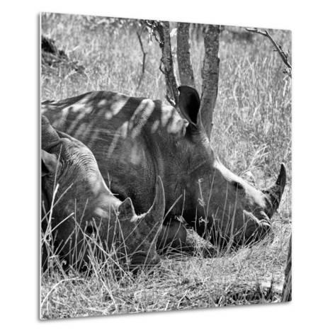 Awesome South Africa Collection Square - Two White Rhinos B&W-Philippe Hugonnard-Metal Print