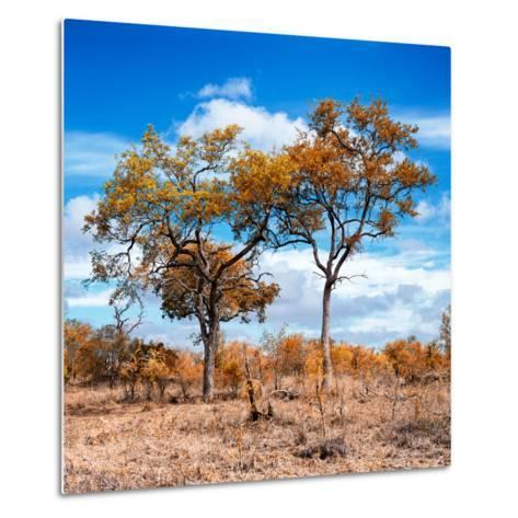 Awesome South Africa Collection Square - Savannah Trees in Fall Colors II-Philippe Hugonnard-Metal Print
