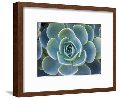 Close-Up of a Succulent Plant-Diane Miller-Framed Art Print