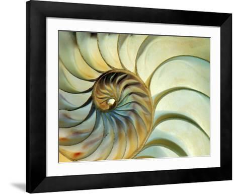 Close-up of Nautilus Shell Spirals-Ellen Kamp-Framed Art Print